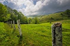 Spring Pasture